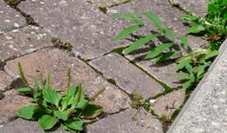 Une recette de désherbant naturel qui enlèvera toutes les mauvaises herbes sans efforts et à coût minime