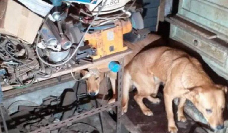 «Maison de l'horreur»: des chiens affamés et une douzaine de chiots retrouvés dans le congélateur