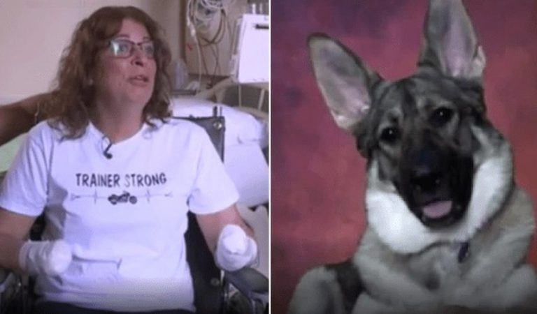 Elle est amputée de ses 4 membres après avoir été léchée par son chien