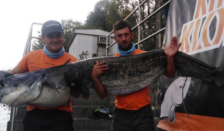 Concours de pêche à Flémalle : un silure d'1m93 et de 60 kilos sorti de la Meuse en Belgique