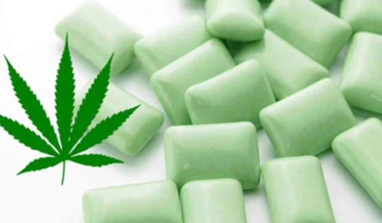 Un chewing-gum au cannabis pour apaiser les douleurs de la fibromyalgie