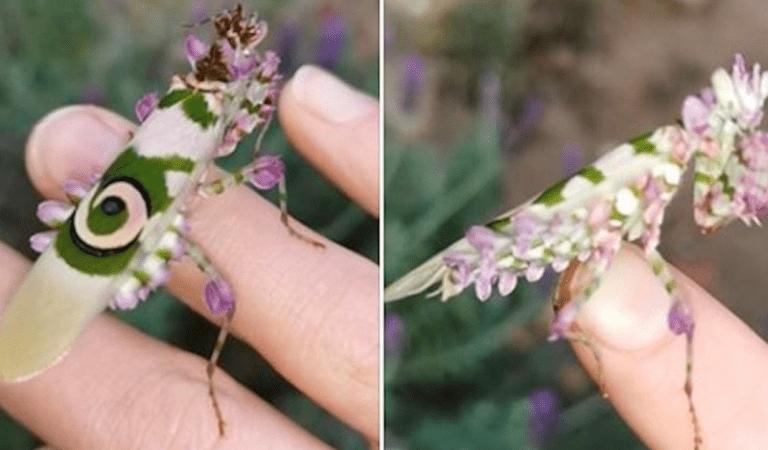 Afrique du Sud : elle découvre un insecte magnifique dans le jardin de son ranch