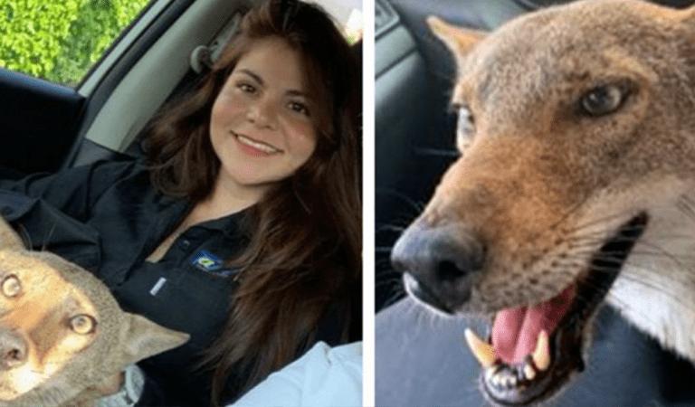 Elle sauve un chien blessé dans la rue, mais découvre plus tard que c'est un coyote
