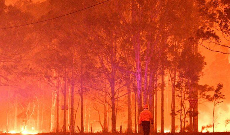 Incendies en Australie : Un koala pleure la mort de son compagnon, une image bouleversante