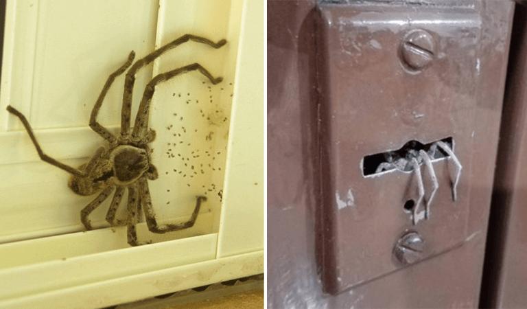 11 photos à ne surtout pas montrer aux personnes qui ont peur des araignées