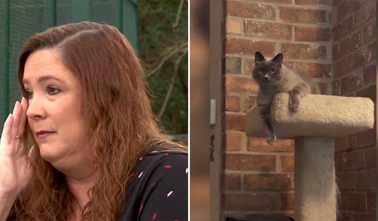 Son chat euthanasié par erreur chez le vétérinaire alors qu'il devait se faire vacciner