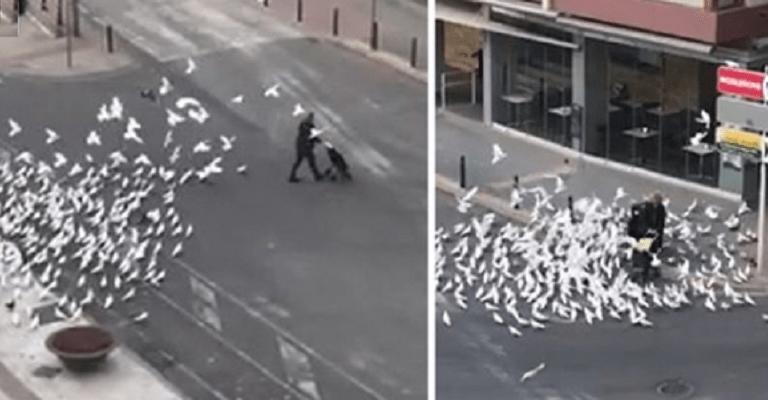 Confinement : une dame attaquée par des centaines de pigeons à la sortie d'un supermarché