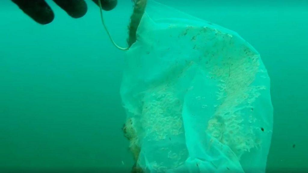 Les gens jettent leurs masques dans l'océan.