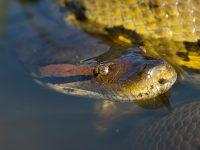 Le serpent n'a montré aucun signe d'hostilité envers les deux plongeurs.