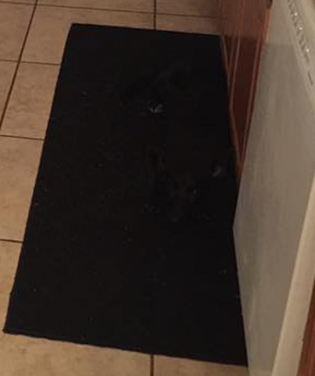 chienne camouflée sur le tapis noir