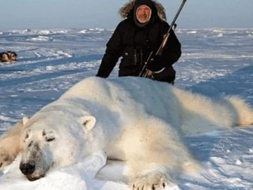 chasse ours