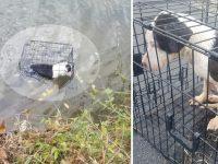 un homme sauve et adopte un chien jetée à l'intérieur d'une cage dans un lac