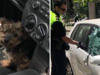 police sauvetage chien enfermé voiture sous 40°C