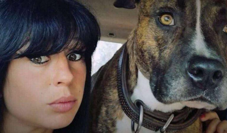 Affaire Elisa Pilarski : le chien Curtis expertisé à Toulouse, les résultats des tests ADN sur le point d'être connus