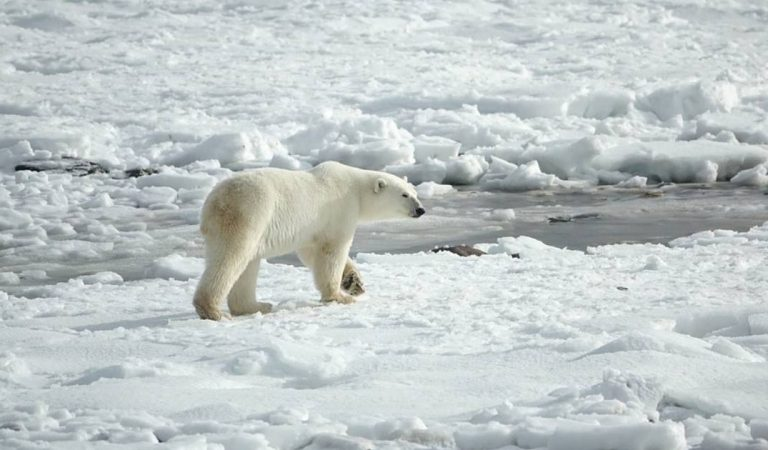 Le réchauffement climatique s'accélère : fontes des glaces record et incendies en Arctique, rien ne va plus (Vidéo)