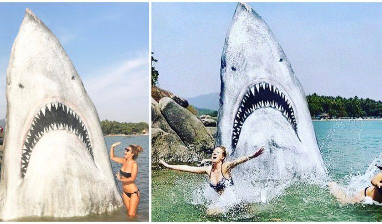 Un grand requin blanc terrorise les baigneurs en Inde