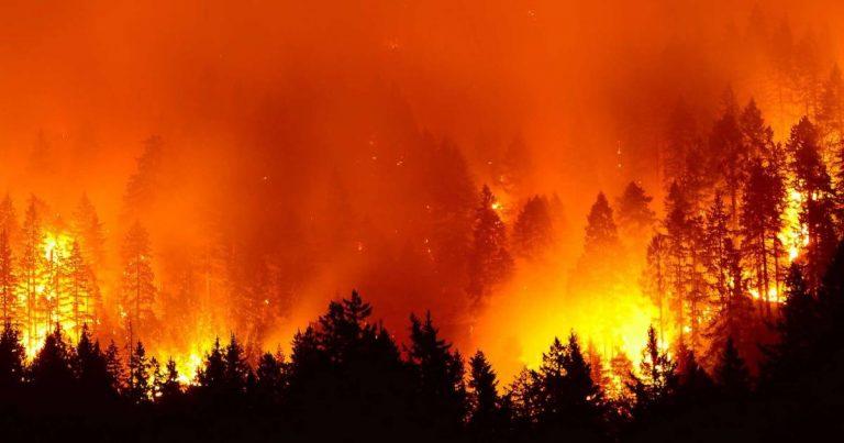 Un gigantesque feu de forêt en Arctique, causé en partie par le réchauffement climatique : 38 degrés atteints en Sibérie