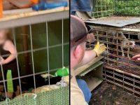 trois personnes arrêtées maltraitance infantile et animale Tennessee