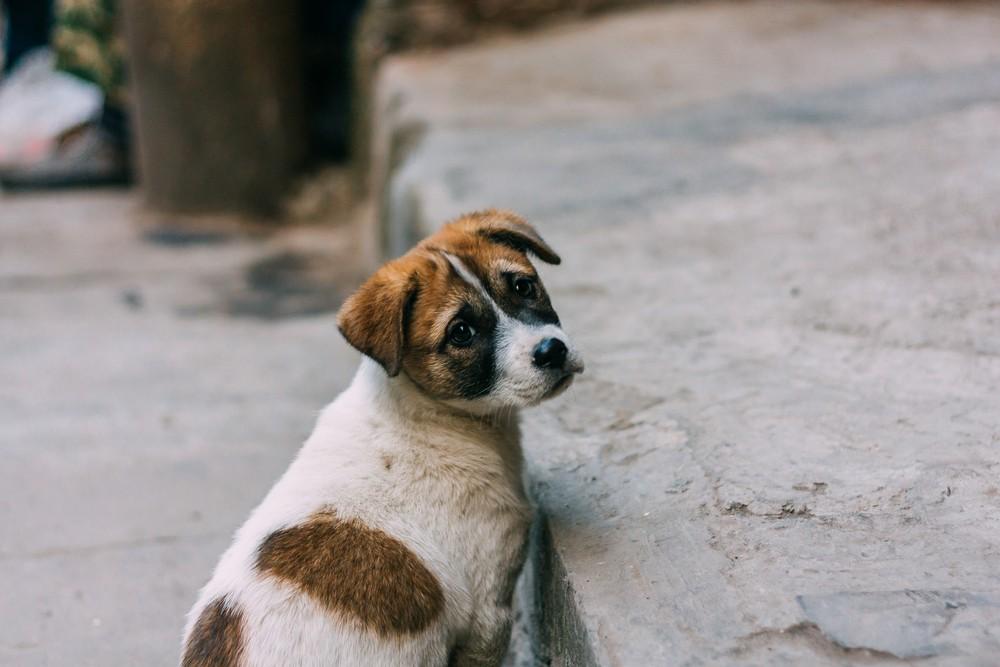 Un chien abandonné par son maître, en France.