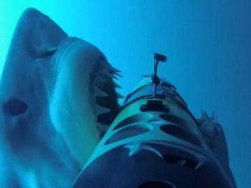 Le requin blanc passant à l'attaque sur le REMUS-100.