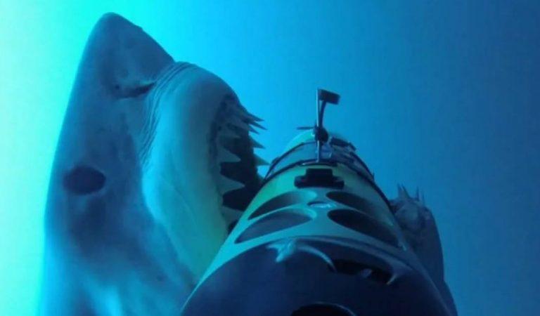 Les images glaçantes de l'attaque brutale d'un grand requin blanc, filmées en 360° (Video)