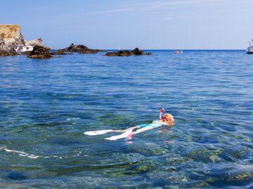 algue toxique ostreopsis danger baignade Méditerranée