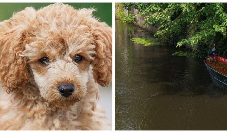 Besançon: énervée, elle jette son chien dans un canal et prend la fuite
