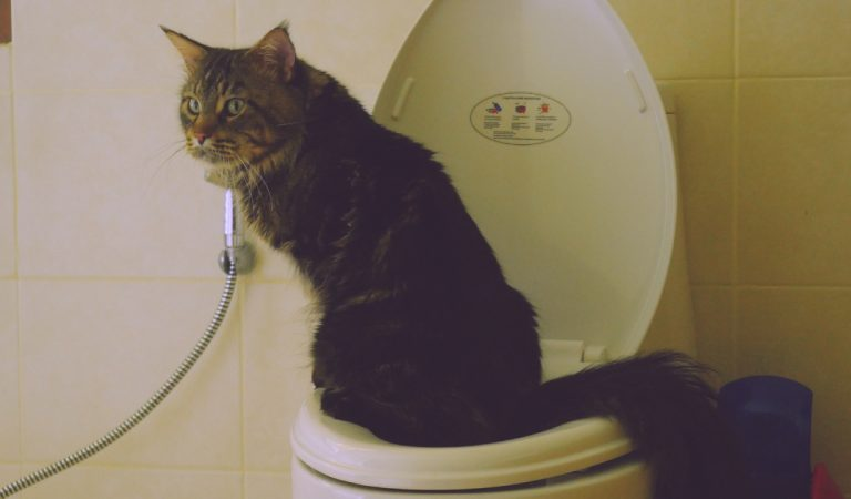 Votre chat fait pipi partout ? Suivez les conseils d'un expert pour le faire arrêter
