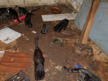 La vingtaine de chats affamés et déshydratés, à Nice.