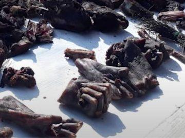 Des mains de singe coupées et brûlées sur les marchés en Inde.