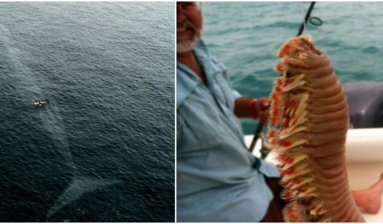 25 photos qui vont vous rendre complètement phobiques de la mer !