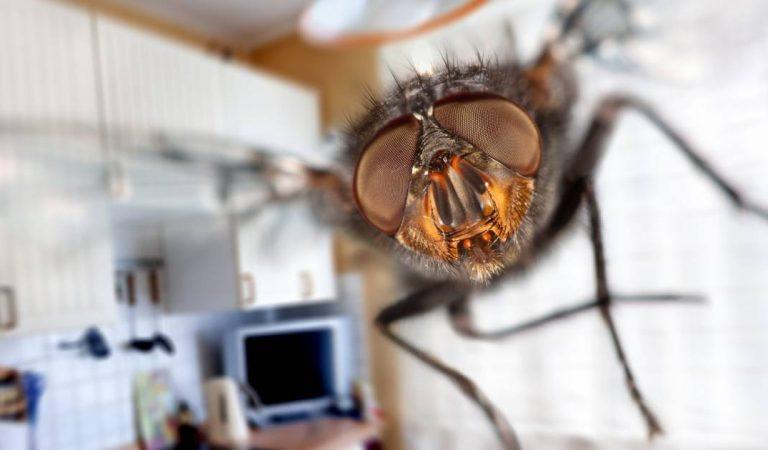 Une internaute partage son astuce simple et efficace pour éloigner les mouches de la maison