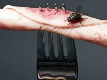 mouche contact nourriture ce qui se passe vraiment