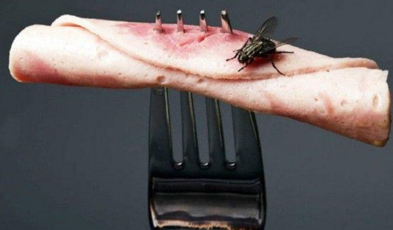 Voici pourquoi il ne faut plus manger la nourriture sur laquelle une mouche s'est posée