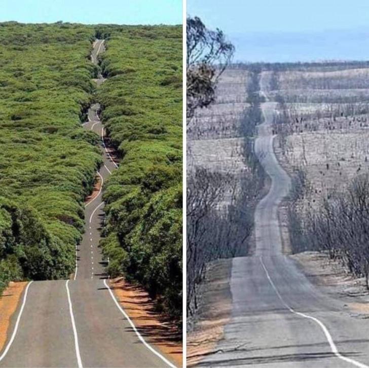 Les incendies dévastateurs en Australie