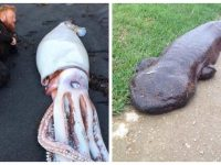 Ces animaux immenses possèdent une taille géante !