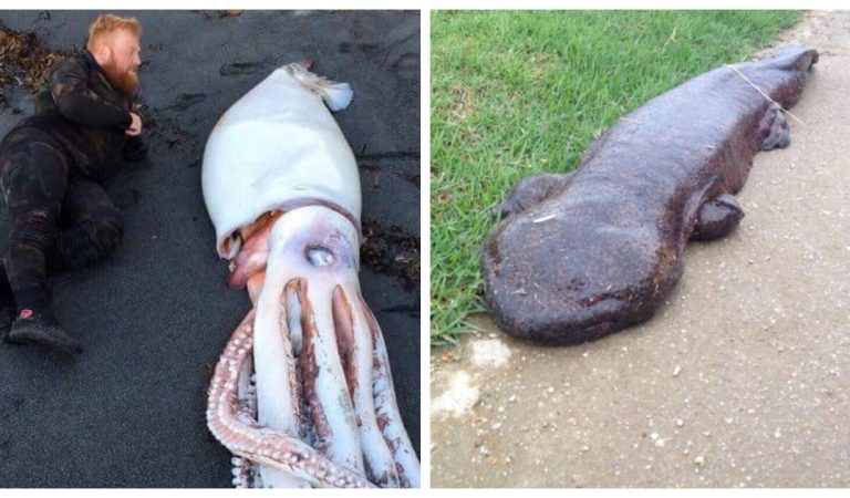 Ces 14 animaux géants possèdent des dimensions tellement hors normes qu'ils en deviennent effrayants
