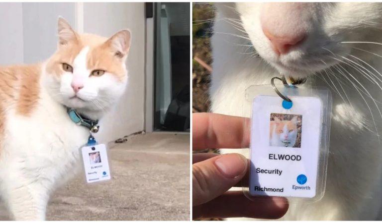 Ce chat errant qui traîne devant un hôpital depuis 1 an est devenu officiellement agent de sécurité !