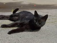 Un chaton noir jeté sur l'autoroute par un conducteur.