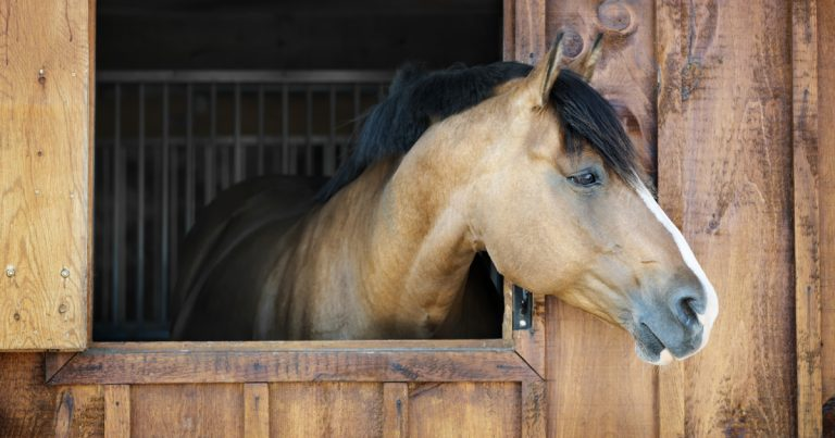 chevaux mutile france