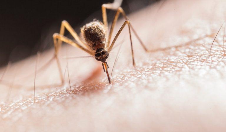 Piqûres de moustiques : comment apaiser les démangeaisons ?