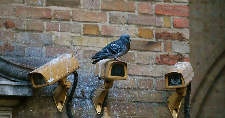 homme mort depuis 6 ans retrouvé grâce aux pigeons