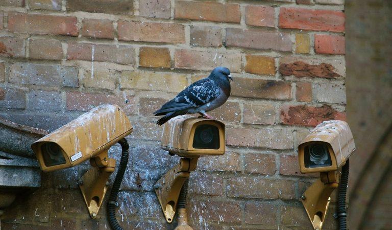 Ivry : le cadavre d'un homme mort depuis 6 ans découvert grâce à des pigeons