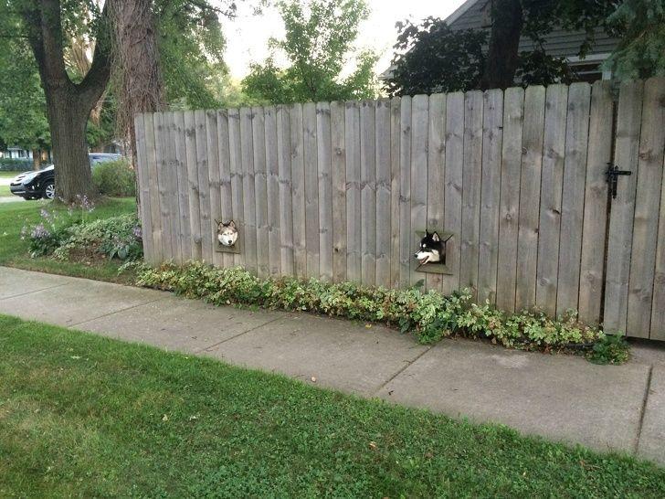 chiens comité d'accueil
