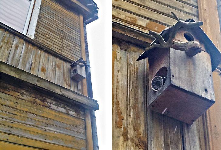 caméra cachée maison oiseau