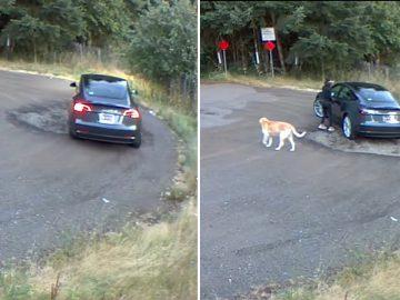 femme filmée abandon chien