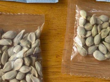 Des sachets de graines envoyés de Chine.