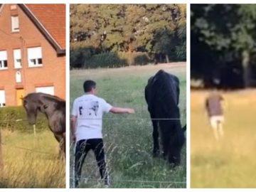 Deux jeunes maltraitent un cheval et un poney à Berbenkos (Heusden-Zolder)