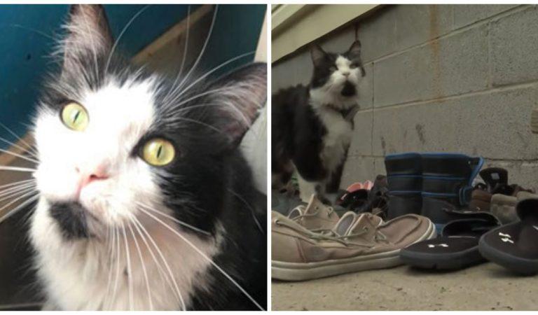 Vidéo : ce chat cleptomane ne peut s'empêcher de voler les chaussures de ses voisins