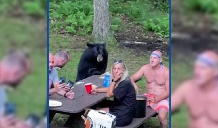 Vidéo : un ours sauvage s'invite au pique-nique d'une famille